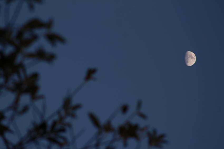 A silhouette of a tree to the left and the waxing gibbous Moon on the right.